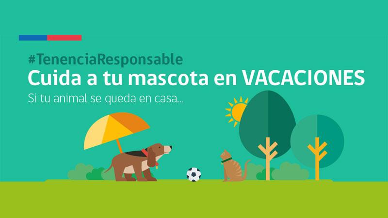 Cuida a tu mascota en vacaciones