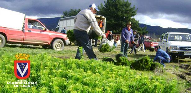 CORMA  SE REÚNE CON ALCALDES E INICIA ENTREGA DE PLANTAS 2013 A CAMPESINOS DEL BIOBÍO