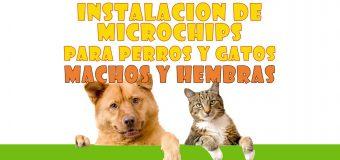 INSTALACIÓN DE MICROCHIPS PARA PERROS Y GATOS