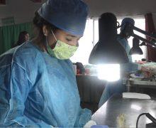 Municipalidad de Laja anuncia fechas para esterilización e instalación de microchips para perros y gatos