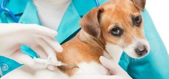 Esterilización e instalación de microchip gratis para perros y gatos