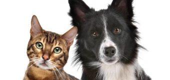 Lanzamiento programa Mascota Protegida en Laja