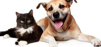 Fechas y horarios de vacunas para Perros y Gatos