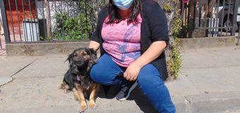 Vecinos de Altos del Laja serán beneficiados con operativo para mascotas